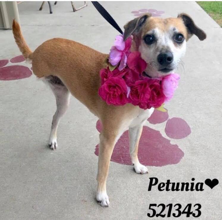 Petunia (Tripod!)