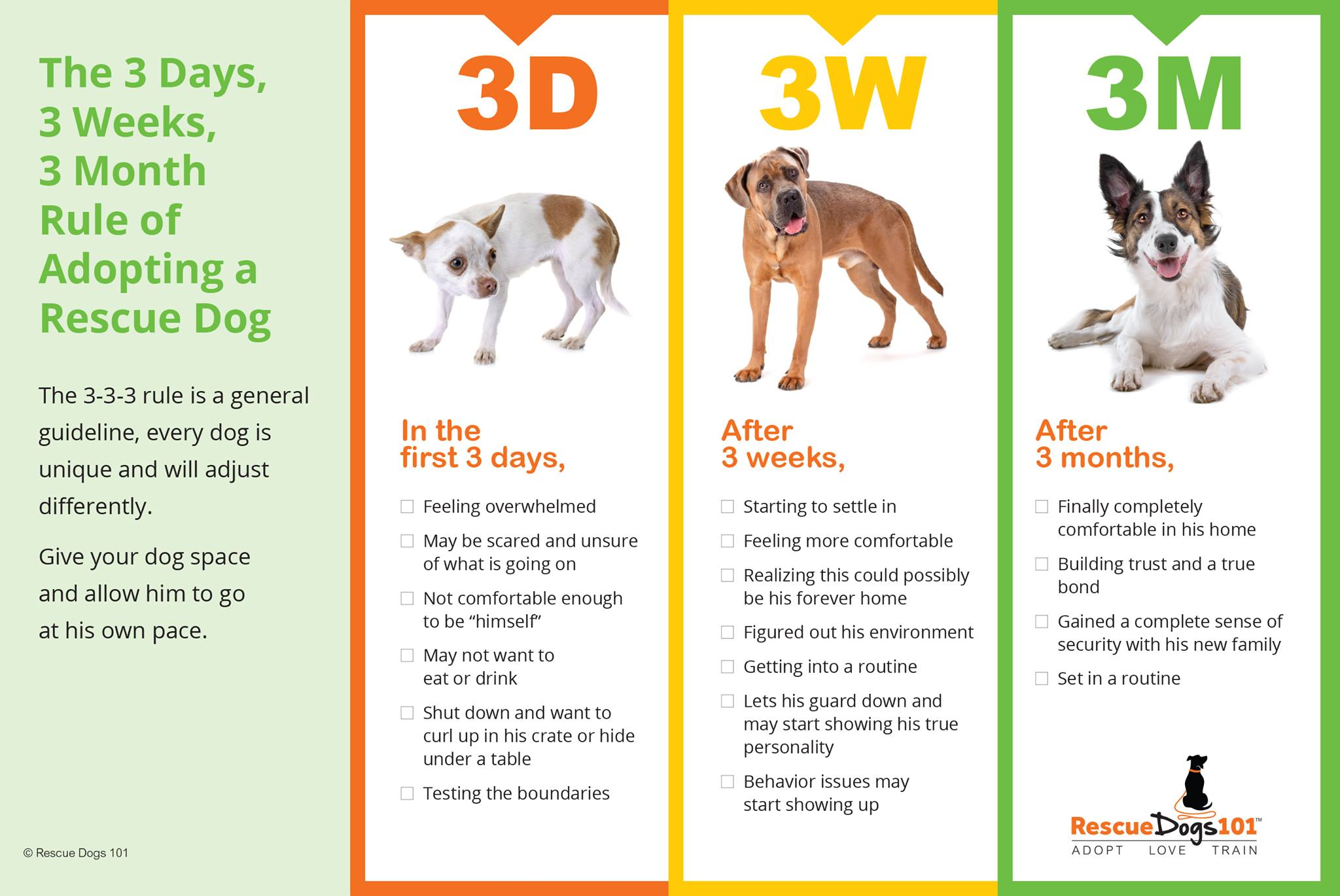 The rescue dog rule of 3
